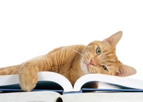 Cat on Books_609107240