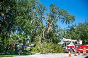Fallen Tree_710909917
